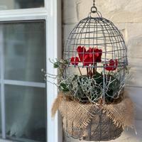 冬の寄せ植え - reco2の花暮らし