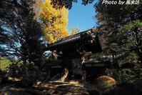 古刹・妙安寺のいま - 四季彩の部屋Ⅱ