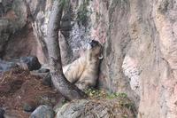 ホッキョクグマ - 動物園へ行こう
