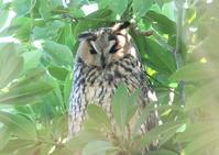 プチ遠征 - 写真で綴る野鳥ごよみ