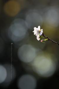 灯 - お花びより