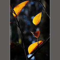 秋の透過光 - HIGEMASA's Moody Photo