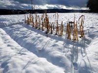 冬へ - 北国の田舎暮らし