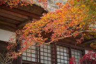 海蔵寺の紅葉 - エーデルワイスPhoto