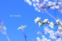 Sun 3 Sunday 秋に桜編 - 心優先モード(^_^)v