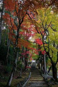 2020京都の紅葉・亀岡積善寺 - デジタルな鍛冶屋の写真歩記