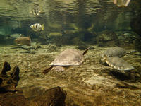 名古屋港水族館~オーストラリアの水辺(December 2019) - 続々・動物園ありマス。
