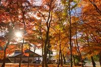 みちのく髙松公園2 - みちのくの大自然