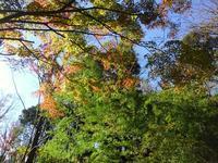 岡村、久良岐公園の紅葉 #3 - 神奈川徒歩々旅