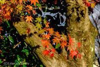 座学の日 - 撃沈風景写真