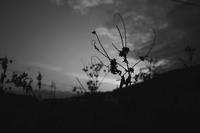 夜の始まり - 旅する       memephoto