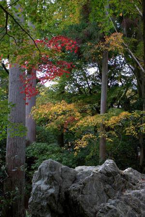 晩秋の龍安寺 3 - 京都ときどき沖縄ところにより気まぐれ