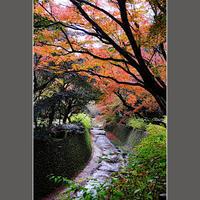 川沿いの紅葉 - HIGEMASA's Moody Photo