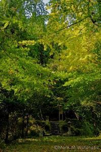 生目神社 - Mark.M.Watanabeの熊本撮影紀行