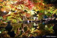 長谷寺の紅葉 - カメラと会いに行く