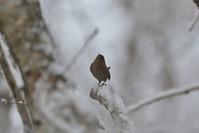 雪のミソっち - やぁやぁ。