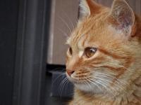 チャ - ネコと裏山日記
