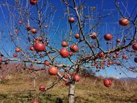 美味しいりんご園を探しに。 - グルグルつばめ食堂