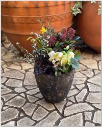 ガーデン&クラフツ12月の寄せ植え教室の準備をしました♪ - 小さな庭 2