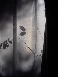 午後の影 - 旅する       memephoto