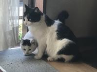 猫のキモチ - フィレンツェのガイド なぎさの便り