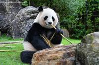 2020年11月白浜パンダ見隊その5 - ハープの徒然草