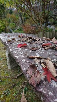 枯れ葉のため小鳥のために石の椅子 - 山庭居 ~庭に居ます~