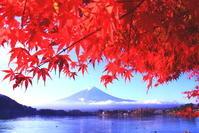 令和2年11月の富士(29)河口湖畔紅葉と富士 - 富士への散歩道 ~撮影記~