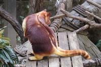 タニさん - 動物園に嵌り中2