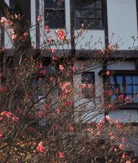 まだ花が咲いてた! - 標高480mの窓からⅡ