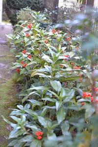 小鳥からの実もの豊作と11月の歩数 - refresh-3