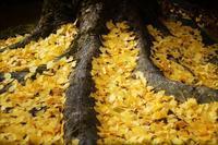 黄色 - feel a season