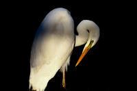 野鳥たちの自然な姿に癒される - スポック艦長のPhoto Diary