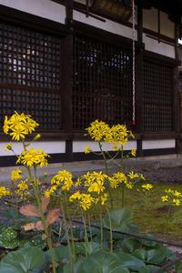 2020紅葉きらめく京都真如堂の秋の始まり - 花景色-K.W.C. PhotoBlog