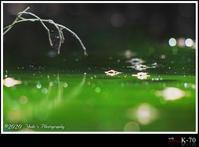 Water Striders Fantasy - ― At my color ―   心に響いた瞬間と 時々気まぐれにつぶやきと。