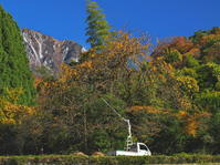 柿の収穫鳥取県 - ty4834 四季の写真Ⅱ