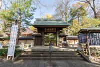 九品仏・浄真寺の仁王像 - あだっちゃんの花鳥風月