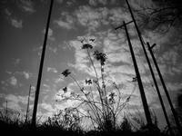 空へ向かって - 旅する       memephoto