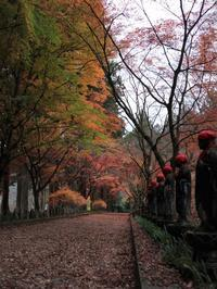 佐野市 金蔵院の紅葉(1) (2020/11/22撮影) - toshiさんのお気楽ブログ