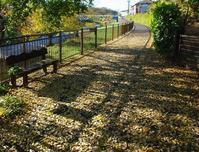 空堀川落ち葉の絨毯 - ひのきよ