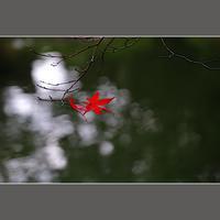 紅一点 - HIGEMASA's Moody Photo