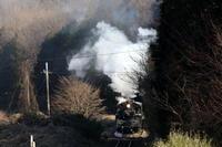 白い煙と黒い機関車と黒い影- 2020年・真岡鉄道 - - ねこの撮った汽車
