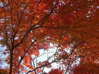 2020年11月の桜山公園 - 仮想行