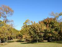 『河跡湖公園の秋風景~』 - 自然風の自然風だより
