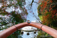 秋の桃太郎神社 - Digital Photo Diary