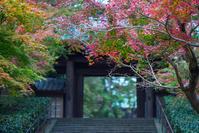 北鎌倉円覚寺の紅葉 - エーデルワイスPhoto