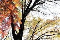 広い森を散歩・・・群馬の森 - 四季折々