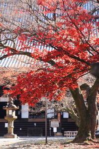 真如堂に行く2020年12月-3 - 写楽彩2