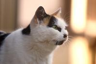 ミケ - ネコと裏山日記