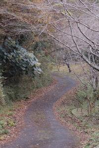 色鮮やかな冬景色 - 千葉県いすみ環境と文化のさとセンター